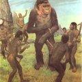 Ősvilág: A valódi Gigantopithecus