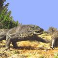 A megalánia és más óriás sárkánygyíkok
