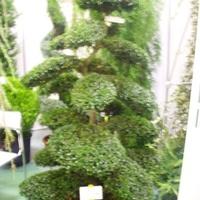Hortus Hungaricus 2009