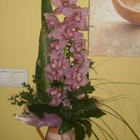 JEGYZET 3: Orchidea Cymbidium