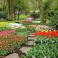 Tulipán-növesztési verseny