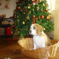 Boldog karácsonyt...