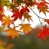 Nemsoká itt az ősz