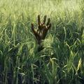 A magas fűben (kritika)
