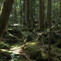 Dzsukai - A fák tengere