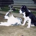 Ma meghalt egy kutyám, Venti