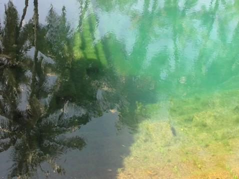 Pálmafák a vízben
