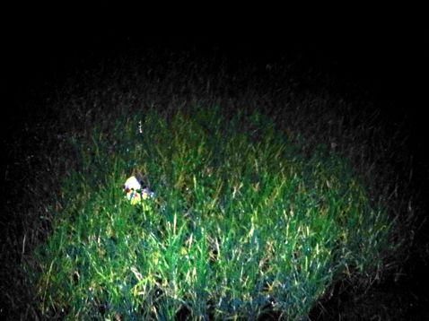 Rizsföld éjjel