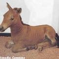 Kis zebra született a Budapesti Állatkertben!