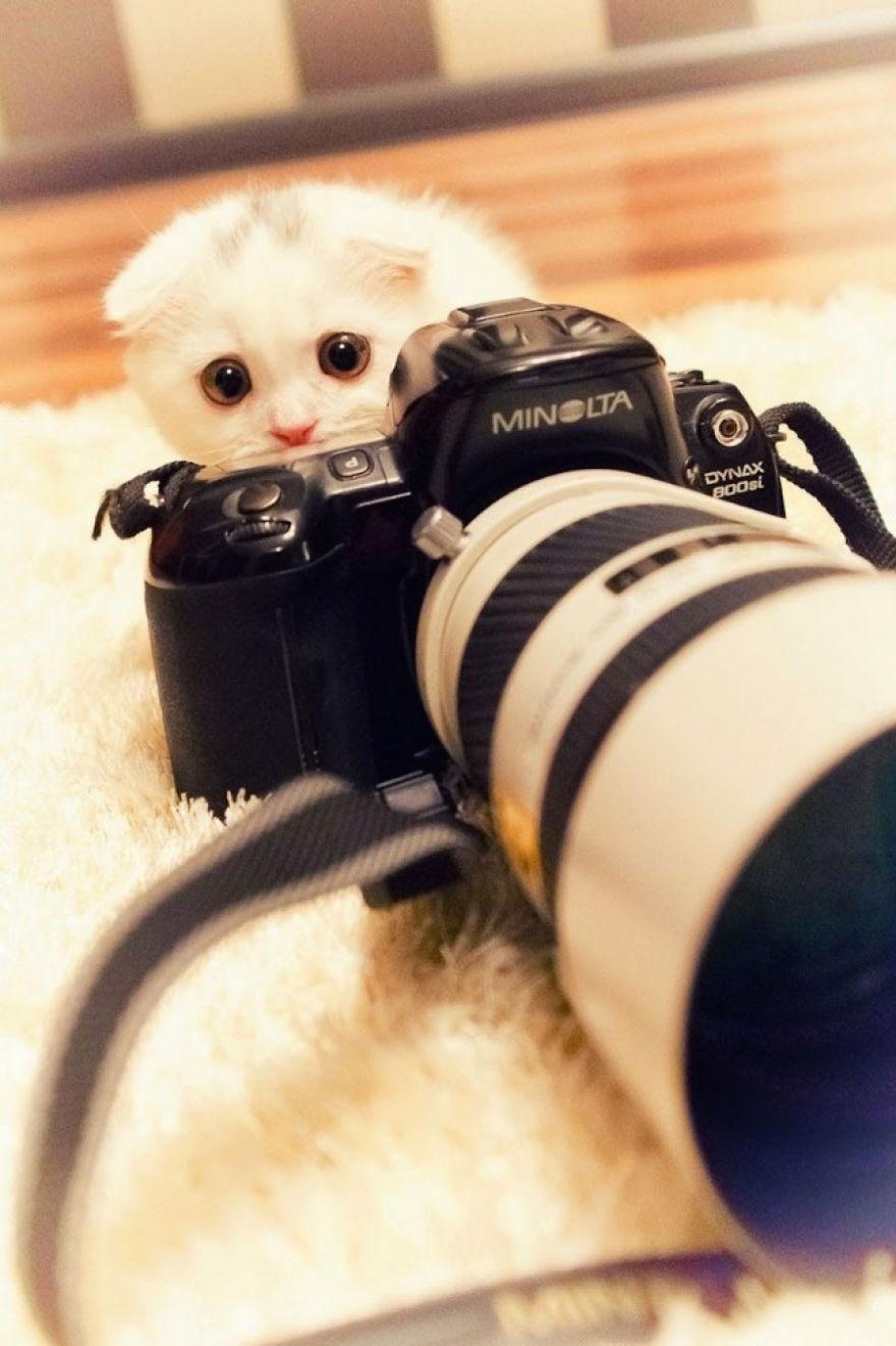 Én itt sem vagyok! Nem látod a paparazzit!