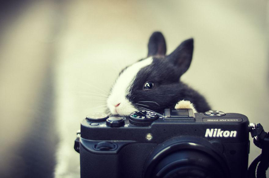Nézd a füleimet és mosolyogj!