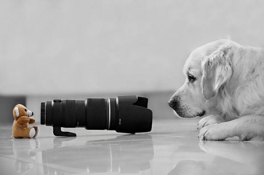 Ez a mackó tényleg képzett fotográfus?
