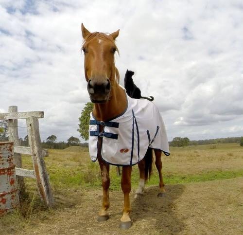 Még egy okos macska, aki a lovaglást választotta!