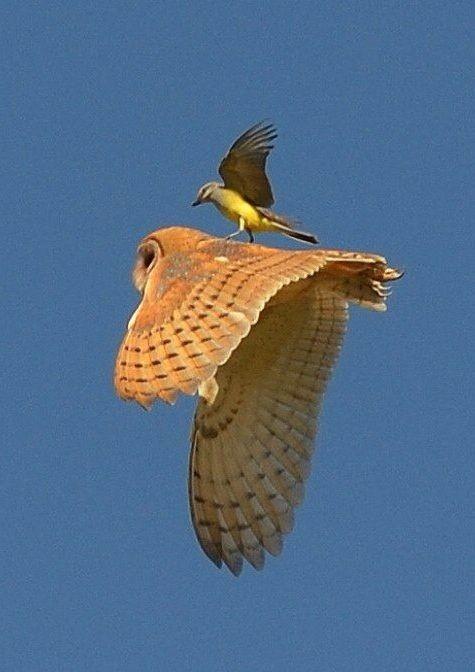 Madár a madáron, avagy repülőgép eltérítés kicsit máshogy!