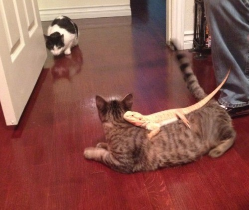 Vajon jól megkapaszkodott a macska szőrében? Kiderül, ha felugrik a szekrény tetejére...