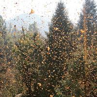 Tömeges vonulás - Lélegzetelállító fotók a vándorló állatokról
