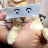 Hogyan üsd el az időt, ha unatkozol? Először is fogj egy cicát...
