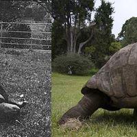 A világ legidősebb állata címet kapja...