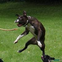 Kutyák, akik teljesen nevetségesen festenek!