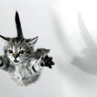 15 állat, akik csak hiszik, hogy tudnak repülni