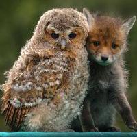 Ezek az állatok nem törődnek a különbségekkel - Különleges barátságok