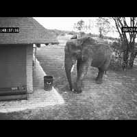 Tiszta udvar, rendes ház - Az elefánt, aki... (videó)