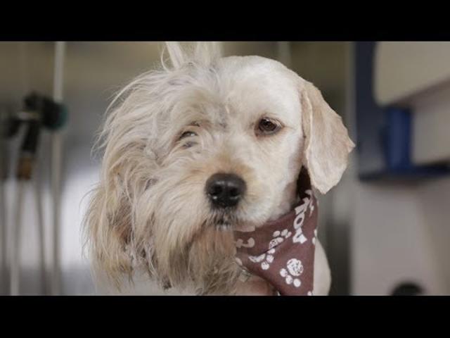 Hajléktalan kutyusból igazi szépség
