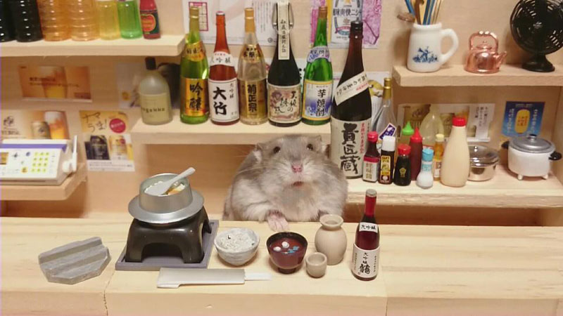 hamster-shopkeepers-running-restaurants-and-bars1.jpg