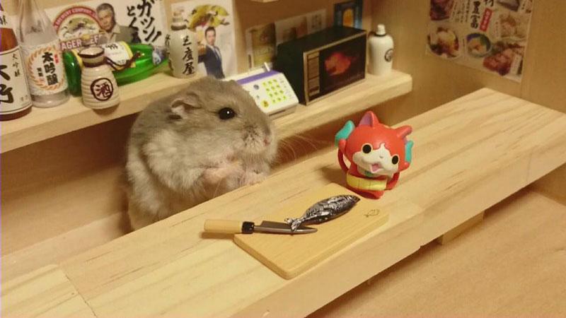 hamster-shopkeepers-running-restaurants-and-bars11.jpg
