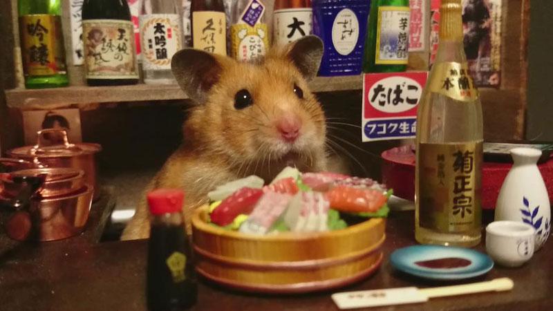 hamster-shopkeepers-running-restaurants-and-bars14.jpg