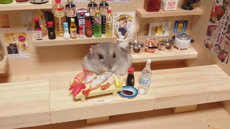 hamster-shopkeepers-running-restaurants-and-bars17.jpg