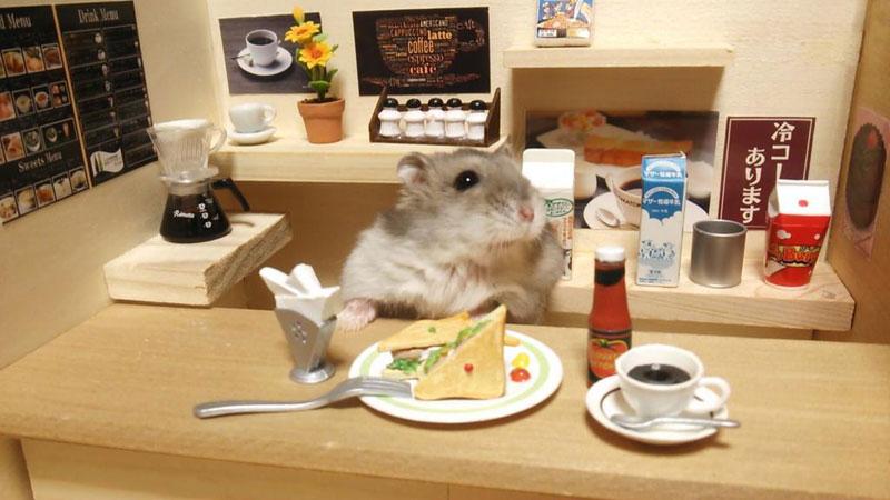 hamster-shopkeepers-running-restaurants-and-bars8.jpg