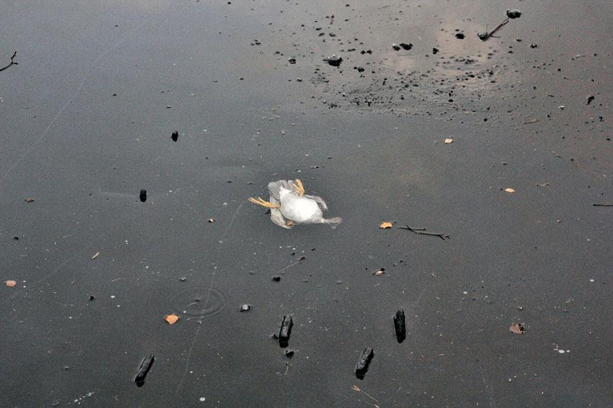 duck-rescue-frozen-lake-norway-10.jpg