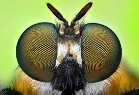 A rovarok szeme sokban különbözik a miénktől