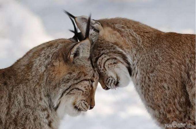 animals-in-love09.jpg