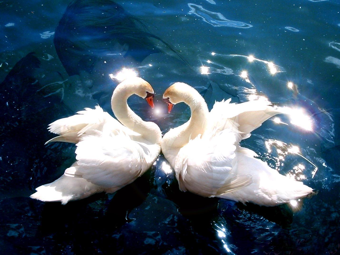 animals-pictures-falling-in-love.jpg