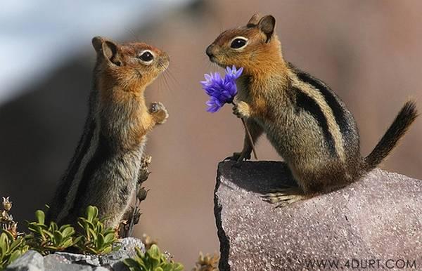 beautiful-flower-for-a-beautiful-lady.jpg