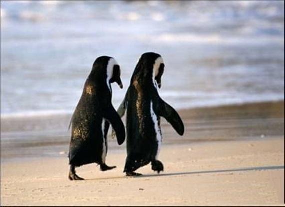 penguinlove.jpg