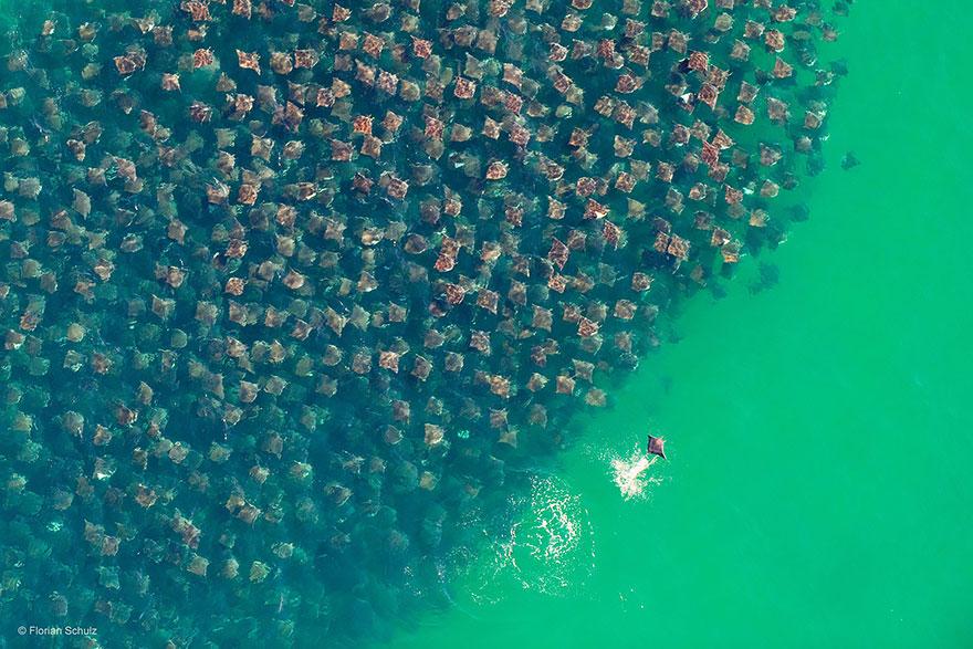 animal-migration-photography-103_880.jpg