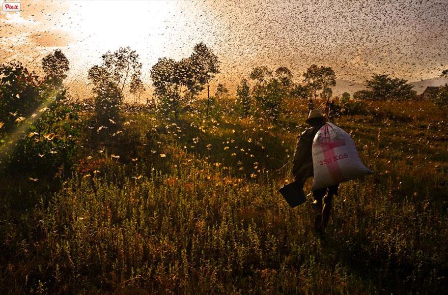 animal-migration-photography-110-1_880.jpg