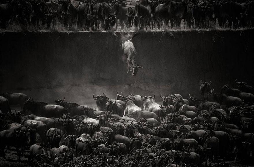 animal-migration-photography-1111_880.jpg