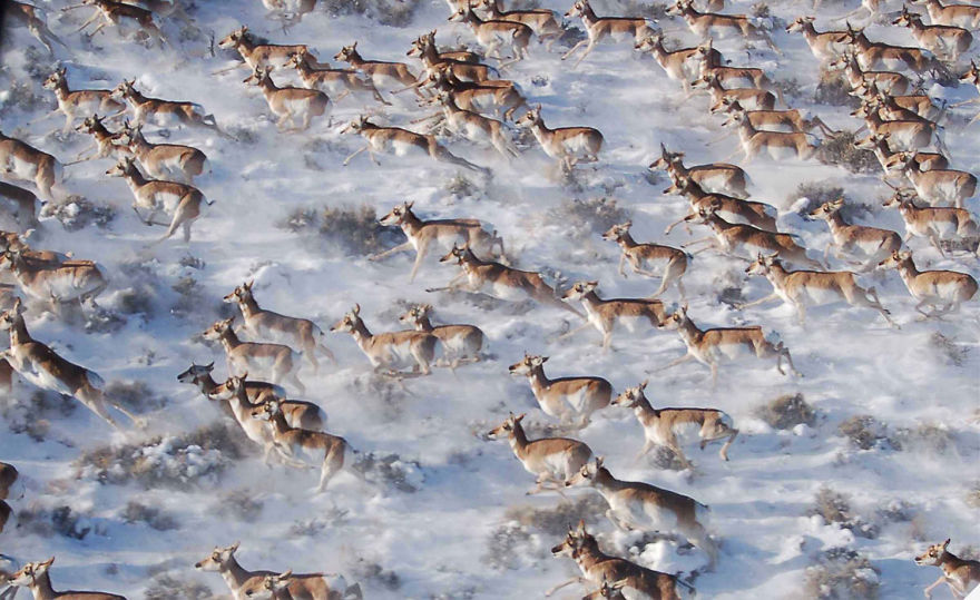 animal-migration-photography-151_880.jpg