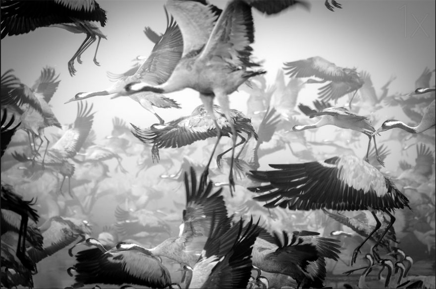 animal-migration-photography-161_880.jpg
