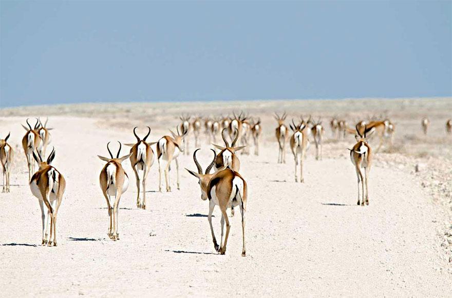 animal-migration-photography-181_880.jpg