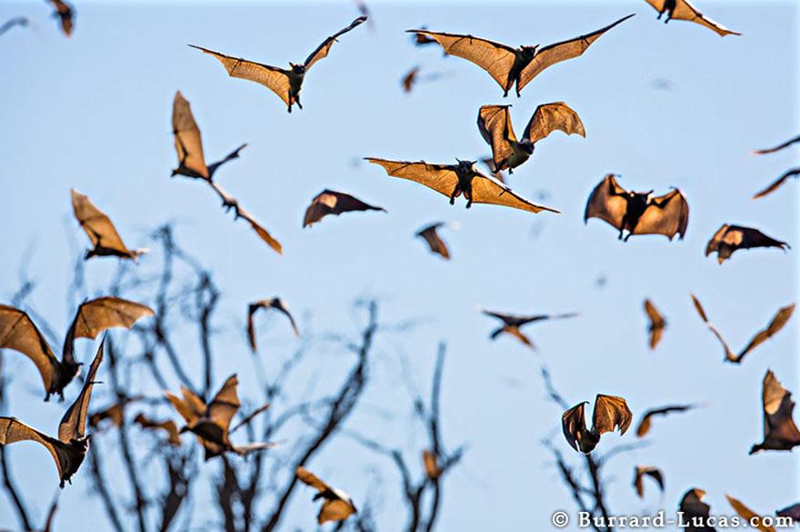 animal-migration-photography-191_880.jpg