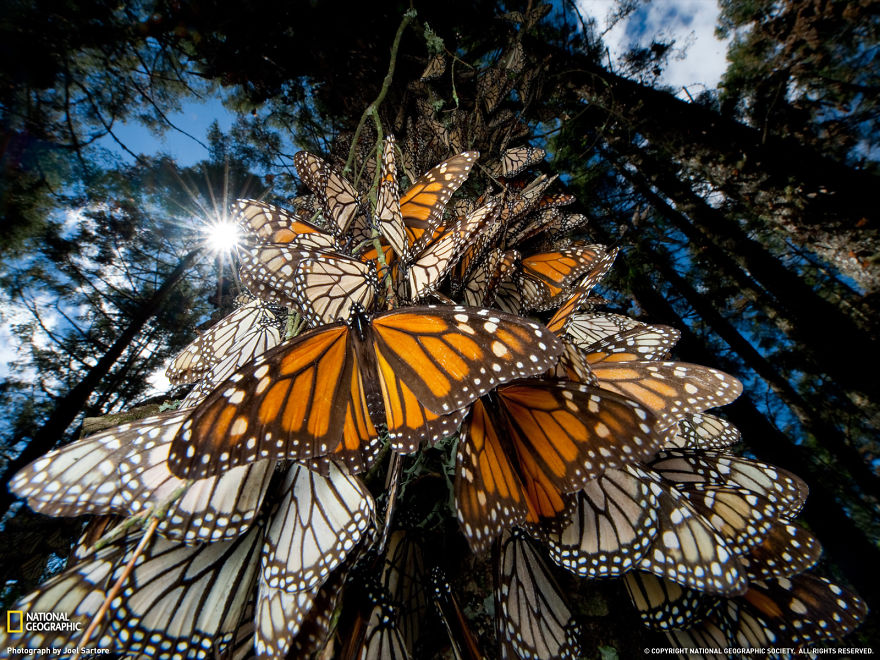 animal-migration-photography-21_880.jpg