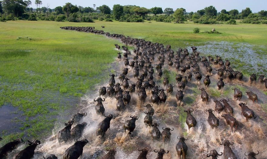 animal-migration-photography-91_880.jpg