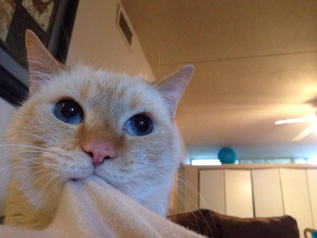 catface3.jpg