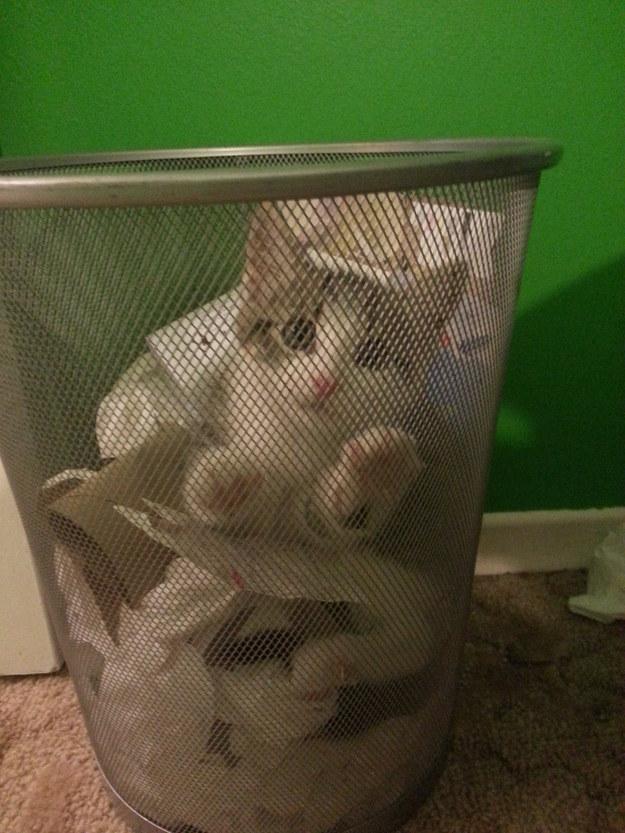 catface4.jpg