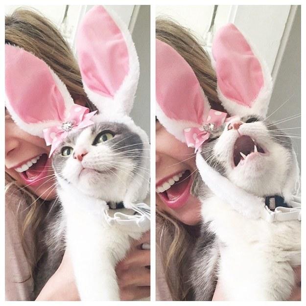 catface9.jpg